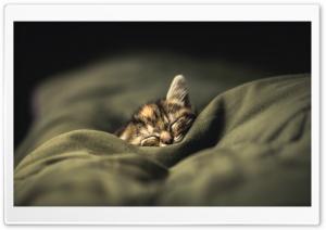 Kitten Ultra HD Wallpaper for 4K UHD Widescreen desktop, tablet & smartphone