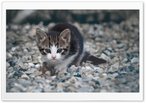 Kitten Ultra HD Wallpaper for 4K UHD Widescreen desktop, tablet & smartphone