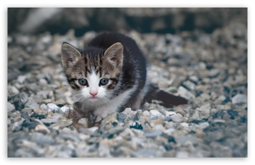 Kitten HD wallpaper for Wide 16:10 5:3 Widescreen WHXGA WQXGA WUXGA WXGA WGA ; HD 16:9 High Definition WQHD QWXGA 1080p 900p 720p QHD nHD ; Standard 4:3 5:4 3:2 Fullscreen UXGA XGA SVGA QSXGA SXGA DVGA HVGA HQVGA devices ( Apple PowerBook G4 iPhone 4 3G 3GS iPod Touch ) ; Tablet 1:1 ; iPad 1/2/Mini ; Mobile 4:3 5:3 3:2 16:9 5:4 - UXGA XGA SVGA WGA DVGA HVGA HQVGA devices ( Apple PowerBook G4 iPhone 4 3G 3GS iPod Touch ) WQHD QWXGA 1080p 900p 720p QHD nHD QSXGA SXGA ;