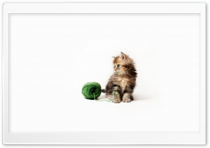 Kitten HD Wide Wallpaper for Widescreen