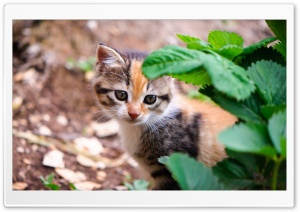 Kitten Behind Leafs HD Wide Wallpaper for Widescreen