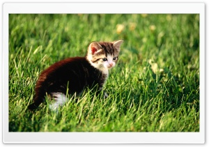 Kitten Exploring The Garden HD Wide Wallpaper for Widescreen