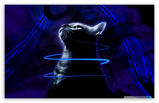 Kitten In Smoke, Neon Glow Line And Brush Effect HD wallpaper for Wide 16:10 5:3 Widescreen WHXGA WQXGA WUXGA WXGA WGA ; HD 16:9 High Definition WQHD QWXGA 1080p 900p 720p QHD nHD ; Standard 3:2 Fullscreen DVGA HVGA HQVGA devices ( Apple PowerBook G4 iPhone 4 3G 3GS iPod Touch ) ; Mobile 5:3 3:2 16:9 - WGA DVGA HVGA HQVGA devices ( Apple PowerBook G4 iPhone 4 3G 3GS iPod Touch ) WQHD QWXGA 1080p 900p 720p QHD nHD ;