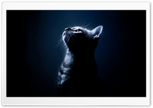 Kitten In The Dark HD Wide Wallpaper for 4K UHD Widescreen desktop & smartphone
