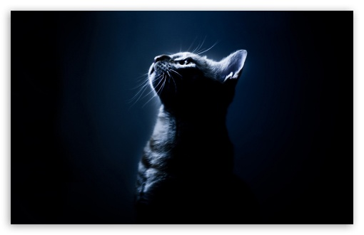 Kitten In The Dark HD wallpaper for Wide 16:10 5:3 Widescreen WHXGA WQXGA WUXGA WXGA WGA ; HD 16:9 High Definition WQHD QWXGA 1080p 900p 720p QHD nHD ; Standard 4:3 5:4 3:2 Fullscreen UXGA XGA SVGA QSXGA SXGA DVGA HVGA HQVGA devices ( Apple PowerBook G4 iPhone 4 3G 3GS iPod Touch ) ; Tablet 1:1 ; iPad 1/2/Mini ; Mobile 4:3 5:3 3:2 16:9 5:4 - UXGA XGA SVGA WGA DVGA HVGA HQVGA devices ( Apple PowerBook G4 iPhone 4 3G 3GS iPod Touch ) WQHD QWXGA 1080p 900p 720p QHD nHD QSXGA SXGA ;