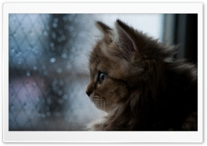 Kitten Looking Out Window HD Wide Wallpaper for 4K UHD Widescreen desktop & smartphone