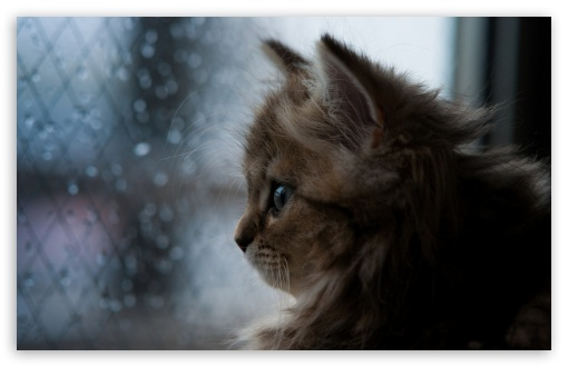 Kitten Looking Out Window ❤ 4K UHD Wallpaper for Wide 16:10 5:3 Widescreen WHXGA WQXGA WUXGA WXGA WGA ; 4K UHD 16:9 Ultra High Definition 2160p 1440p 1080p 900p 720p ; Standard 4:3 5:4 3:2 Fullscreen UXGA XGA SVGA QSXGA SXGA DVGA HVGA HQVGA ( Apple PowerBook G4 iPhone 4 3G 3GS iPod Touch ) ; Tablet 1:1 ; iPad 1/2/Mini ; Mobile 4:3 5:3 3:2 16:9 5:4 - UXGA XGA SVGA WGA DVGA HVGA HQVGA ( Apple PowerBook G4 iPhone 4 3G 3GS iPod Touch ) 2160p 1440p 1080p 900p 720p QSXGA SXGA ;