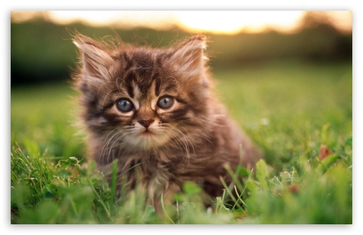 Kitten Portrait HD wallpaper for Wide 16:10 5:3 Widescreen WHXGA WQXGA WUXGA WXGA WGA ; HD 16:9 High Definition WQHD QWXGA 1080p 900p 720p QHD nHD ; Standard 4:3 5:4 3:2 Fullscreen UXGA XGA SVGA QSXGA SXGA DVGA HVGA HQVGA devices ( Apple PowerBook G4 iPhone 4 3G 3GS iPod Touch ) ; Tablet 1:1 ; iPad 1/2/Mini ; Mobile 4:3 5:3 3:2 16:9 5:4 - UXGA XGA SVGA WGA DVGA HVGA HQVGA devices ( Apple PowerBook G4 iPhone 4 3G 3GS iPod Touch ) WQHD QWXGA 1080p 900p 720p QHD nHD QSXGA SXGA ;