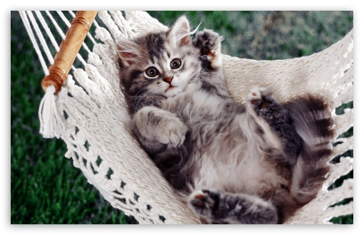 Kitten Sitting In A Hammock ❤ 4K UHD Wallpaper for Wide 16:10 5:3 Widescreen WHXGA WQXGA WUXGA WXGA WGA ; 4K UHD 16:9 Ultra High Definition 2160p 1440p 1080p 900p 720p ; Standard 4:3 5:4 3:2 Fullscreen UXGA XGA SVGA QSXGA SXGA DVGA HVGA HQVGA ( Apple PowerBook G4 iPhone 4 3G 3GS iPod Touch ) ; Tablet 1:1 ; iPad 1/2/Mini ; Mobile 4:3 5:3 3:2 16:9 5:4 - UXGA XGA SVGA WGA DVGA HVGA HQVGA ( Apple PowerBook G4 iPhone 4 3G 3GS iPod Touch ) 2160p 1440p 1080p 900p 720p QSXGA SXGA ;