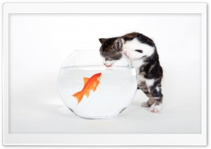 Kitten vs. Fish HD Wide Wallpaper for Widescreen