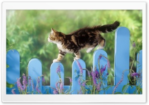 Kitten Walking On A Fence HD Wide Wallpaper for Widescreen