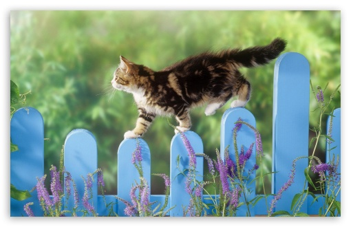 Kitten Walking On A Fence HD wallpaper for Wide 16:10 5:3 Widescreen WHXGA WQXGA WUXGA WXGA WGA ; HD 16:9 High Definition WQHD QWXGA 1080p 900p 720p QHD nHD ; Standard 4:3 5:4 3:2 Fullscreen UXGA XGA SVGA QSXGA SXGA DVGA HVGA HQVGA devices ( Apple PowerBook G4 iPhone 4 3G 3GS iPod Touch ) ; Tablet 1:1 ; iPad 1/2/Mini ; Mobile 4:3 5:3 3:2 16:9 5:4 - UXGA XGA SVGA WGA DVGA HVGA HQVGA devices ( Apple PowerBook G4 iPhone 4 3G 3GS iPod Touch ) WQHD QWXGA 1080p 900p 720p QHD nHD QSXGA SXGA ;