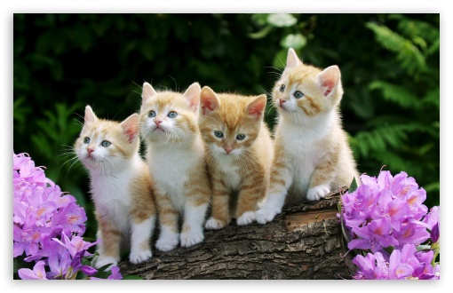 Download Kittens HD Wallpaper