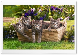 Kittens In Basket HD Wide Wallpaper for Widescreen