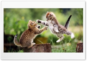 Kittens Play HD Wide Wallpaper for Widescreen