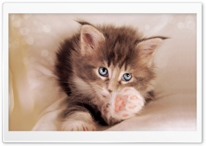 Kitty Cat HD Wide Wallpaper for Widescreen