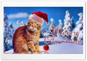 Kitty Christmas HD Wide Wallpaper for 4K UHD Widescreen desktop & smartphone