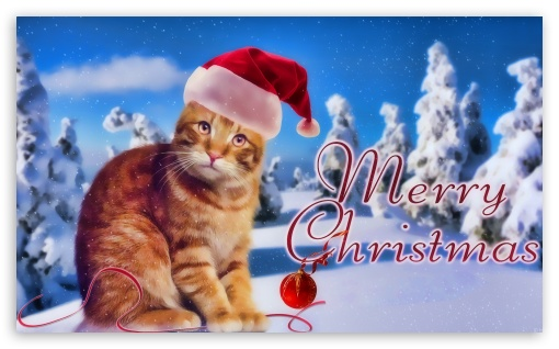 Kitty Christmas HD wallpaper for Wide 5:3 Widescreen WGA ; HD 16:9 High Definition WQHD QWXGA 1080p 900p 720p QHD nHD ; Mobile 5:3 16:9 - WGA WQHD QWXGA 1080p 900p 720p QHD nHD ;