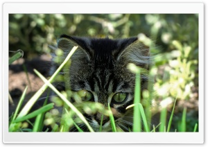 Kitty In Grass HD Wide Wallpaper for Widescreen