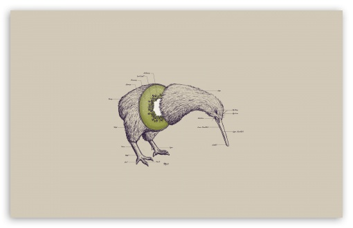 Kiwi Bird HD wallpaper for Standard 4:3 5:4 Fullscreen UXGA XGA SVGA QSXGA SXGA ; Wide 16:10 5:3 Widescreen WHXGA WQXGA WUXGA WXGA WGA ; HD 16:9 High Definition WQHD QWXGA 1080p 900p 720p QHD nHD ; Other 3:2 DVGA HVGA HQVGA devices ( Apple PowerBook G4 iPhone 4 3G 3GS iPod Touch ) ; Mobile VGA WVGA iPhone iPad PSP Phone - VGA QVGA Smartphone ( PocketPC GPS iPod Zune BlackBerry HTC Samsung LG Nokia Eten Asus ) WVGA WQVGA Smartphone ( HTC Samsung Sony Ericsson LG Vertu MIO ) HVGA Smartphone ( Apple iPhone iPod BlackBerry HTC Samsung Nokia ) Sony PSP Zune HD Zen ; Tablet 2 ;