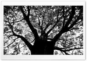 Knew A Tree In Boston HD Wide Wallpaper for Widescreen