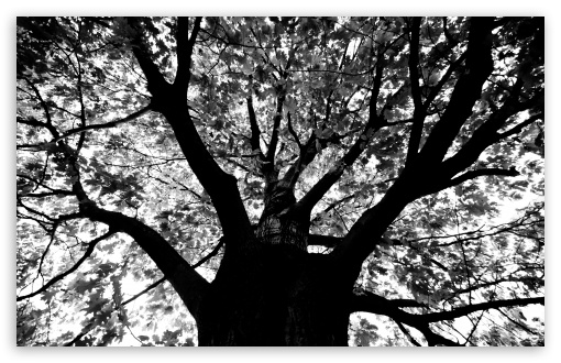 Knew A Tree In Boston HD wallpaper for Wide 16:10 5:3 Widescreen WHXGA WQXGA WUXGA WXGA WGA ; HD 16:9 High Definition WQHD QWXGA 1080p 900p 720p QHD nHD ; UHD 16:9 WQHD QWXGA 1080p 900p 720p QHD nHD ; Standard 4:3 5:4 3:2 Fullscreen UXGA XGA SVGA QSXGA SXGA DVGA HVGA HQVGA devices ( Apple PowerBook G4 iPhone 4 3G 3GS iPod Touch ) ; Tablet 1:1 ; iPad 1/2/Mini ; Mobile 4:3 5:3 3:2 16:9 5:4 - UXGA XGA SVGA WGA DVGA HVGA HQVGA devices ( Apple PowerBook G4 iPhone 4 3G 3GS iPod Touch ) WQHD QWXGA 1080p 900p 720p QHD nHD QSXGA SXGA ;