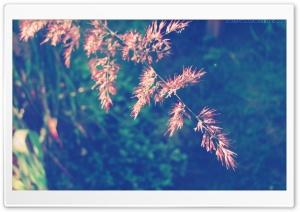 Kohoutek nebo Slepicka HD Wide Wallpaper for Widescreen
