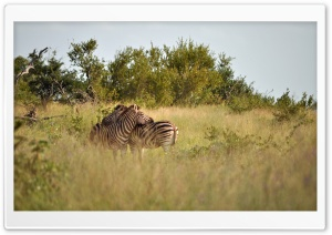 Kruger National Park HD Wide Wallpaper for Widescreen