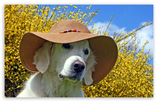 Labrador Wearing Beach Hat HD wallpaper for Wide 16:10 5:3 Widescreen WHXGA WQXGA WUXGA WXGA WGA ; HD 16:9 High Definition WQHD QWXGA 1080p 900p 720p QHD nHD ; Standard 4:3 5:4 3:2 Fullscreen UXGA XGA SVGA QSXGA SXGA DVGA HVGA HQVGA devices ( Apple PowerBook G4 iPhone 4 3G 3GS iPod Touch ) ; iPad 1/2/Mini ; Mobile 4:3 5:3 3:2 16:9 5:4 - UXGA XGA SVGA WGA DVGA HVGA HQVGA devices ( Apple PowerBook G4 iPhone 4 3G 3GS iPod Touch ) WQHD QWXGA 1080p 900p 720p QHD nHD QSXGA SXGA ;