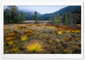 Lac de Lispach, Vosges Mountains, France Ultra HD Wallpaper for 4K UHD Widescreen desktop, tablet & smartphone