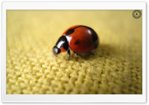 Ladybird HD Wide Wallpaper for Widescreen