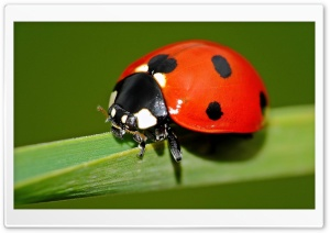 Ladybird Explore HD Wide Wallpaper for Widescreen
