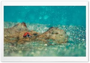 Ladybird Under Rain HD Wide Wallpaper for Widescreen