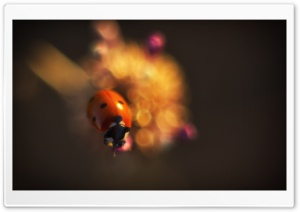 Ladybug In Sun Light, Summer HD Wide Wallpaper for Widescreen