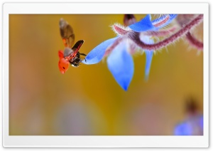 Ladybug Taking Flight HD Wide Wallpaper for 4K UHD Widescreen desktop & smartphone