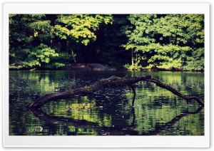 Lake at Forest HD Wide Wallpaper for Widescreen