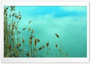Lake Reed HD Wide Wallpaper for Widescreen