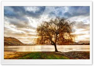 Lake Shore Tree HD Wide Wallpaper for Widescreen