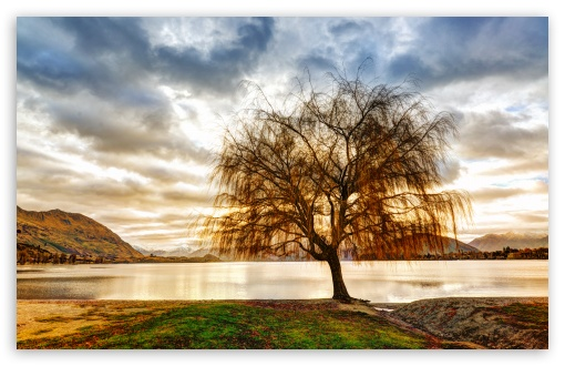 Lake Shore Tree ❤ 4K UHD Wallpaper for Wide 16:10 5:3 Widescreen WHXGA WQXGA WUXGA WXGA WGA ; 4K UHD 16:9 Ultra High Definition 2160p 1440p 1080p 900p 720p ; UHD 16:9 2160p 1440p 1080p 900p 720p ; Standard 4:3 5:4 3:2 Fullscreen UXGA XGA SVGA QSXGA SXGA DVGA HVGA HQVGA ( Apple PowerBook G4 iPhone 4 3G 3GS iPod Touch ) ; Tablet 1:1 ; iPad 1/2/Mini ; Mobile 4:3 5:3 3:2 16:9 5:4 - UXGA XGA SVGA WGA DVGA HVGA HQVGA ( Apple PowerBook G4 iPhone 4 3G 3GS iPod Touch ) 2160p 1440p 1080p 900p 720p QSXGA SXGA ;