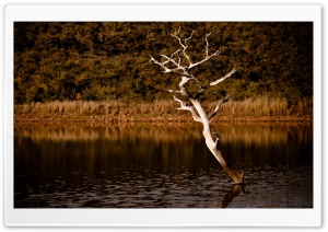 Lake Tree HD Wide Wallpaper for Widescreen