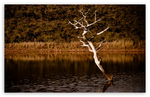 Lake Tree ❤ 4K UHD Wallpaper for Wide 16:10 5:3 Widescreen WHXGA WQXGA WUXGA WXGA WGA ; 4K UHD 16:9 Ultra High Definition 2160p 1440p 1080p 900p 720p ; Standard 4:3 5:4 3:2 Fullscreen UXGA XGA SVGA QSXGA SXGA DVGA HVGA HQVGA ( Apple PowerBook G4 iPhone 4 3G 3GS iPod Touch ) ; Tablet 1:1 ; iPad 1/2/Mini ; Mobile 4:3 5:3 3:2 16:9 5:4 - UXGA XGA SVGA WGA DVGA HVGA HQVGA ( Apple PowerBook G4 iPhone 4 3G 3GS iPod Touch ) 2160p 1440p 1080p 900p 720p QSXGA SXGA ;