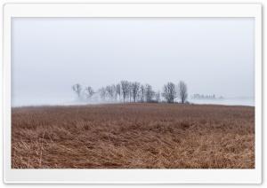 Landscape, Fog, Cold, Reeds, Bare Trees Ultra HD Wallpaper for 4K UHD Widescreen desktop, tablet & smartphone