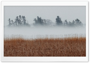 Landscape, Fog, Cold, Reeds, Trees Ultra HD Wallpaper for 4K UHD Widescreen desktop, tablet & smartphone