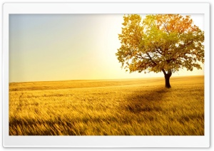 Landscape Nature Trees Fields HD Wide Wallpaper for Widescreen