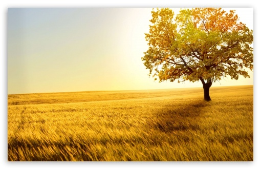Landscape Nature Trees Fields HD wallpaper for Wide 16:10 5:3 Widescreen WHXGA WQXGA WUXGA WXGA WGA ; HD 16:9 High Definition WQHD QWXGA 1080p 900p 720p QHD nHD ; Standard 4:3 5:4 3:2 Fullscreen UXGA XGA SVGA QSXGA SXGA DVGA HVGA HQVGA devices ( Apple PowerBook G4 iPhone 4 3G 3GS iPod Touch ) ; Tablet 1:1 ; iPad 1/2/Mini ; Mobile 4:3 5:3 3:2 16:9 5:4 - UXGA XGA SVGA WGA DVGA HVGA HQVGA devices ( Apple PowerBook G4 iPhone 4 3G 3GS iPod Touch ) WQHD QWXGA 1080p 900p 720p QHD nHD QSXGA SXGA ; Dual 4:3 5:4 UXGA XGA SVGA QSXGA SXGA ;