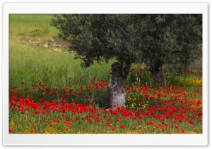 Landscape with Poppies HD Wide Wallpaper for Widescreen