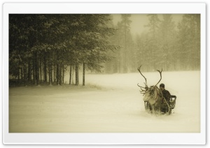 Lapland Reindeer Ride HD Wide Wallpaper for Widescreen