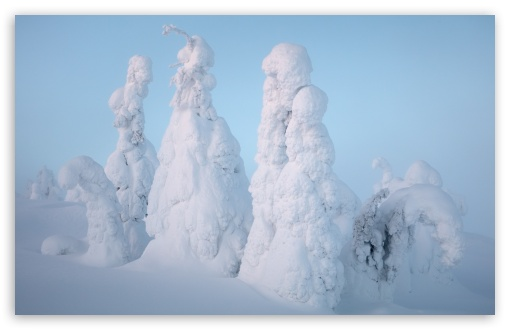 Download Lapland Winter Snow HD Wallpaper