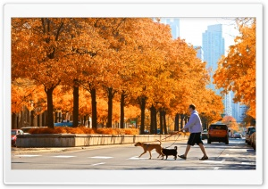 LaSalle Street, Chicago, Autumn HD Wide Wallpaper for 4K UHD Widescreen desktop & smartphone