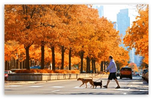 LaSalle Street, Chicago, Autumn ❤ 4K UHD Wallpaper for Wide 16:10 5:3 Widescreen WHXGA WQXGA WUXGA WXGA WGA ; 4K UHD 16:9 Ultra High Definition 2160p 1440p 1080p 900p 720p ; UHD 16:9 2160p 1440p 1080p 900p 720p ; Standard 4:3 5:4 3:2 Fullscreen UXGA XGA SVGA QSXGA SXGA DVGA HVGA HQVGA ( Apple PowerBook G4 iPhone 4 3G 3GS iPod Touch ) ; Smartphone 5:3 WGA ; Tablet 1:1 ; iPad 1/2/Mini ; Mobile 4:3 5:3 3:2 16:9 5:4 - UXGA XGA SVGA WGA DVGA HVGA HQVGA ( Apple PowerBook G4 iPhone 4 3G 3GS iPod Touch ) 2160p 1440p 1080p 900p 720p QSXGA SXGA ;